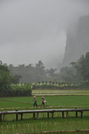 Vieng Tara Villa : Rice Fields Workers come back from Work in front of Your Terrace
