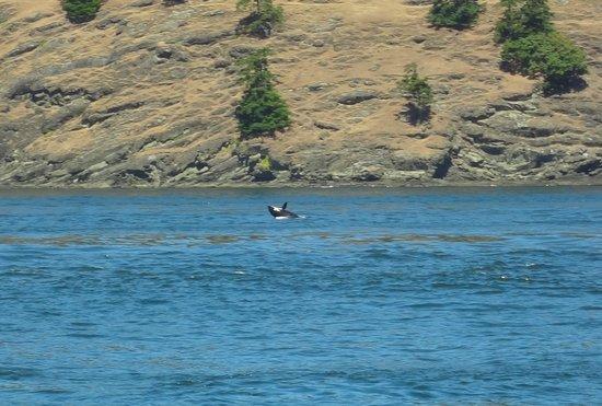 Mystic Sea Charters: orca