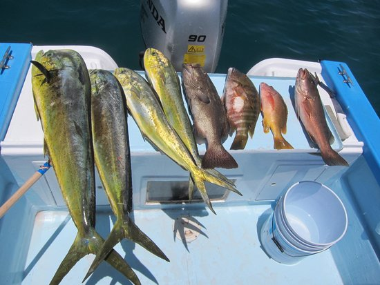 Tailhunter International Sportfishing: A samp-ling of the fish caught on this trip