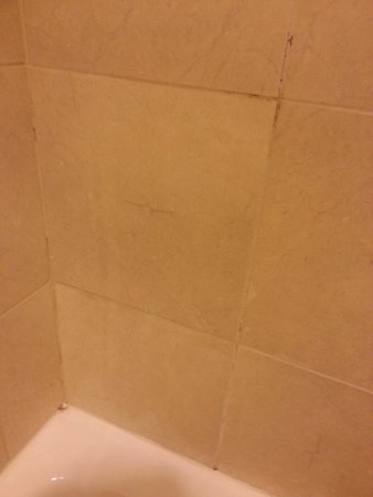 St. Louis City Center Hotel: Nasty mold in bathroom.  We stood on towels in the bathtub to shower.