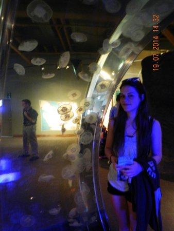 Seattle Aquarium : Jelly Fish arch