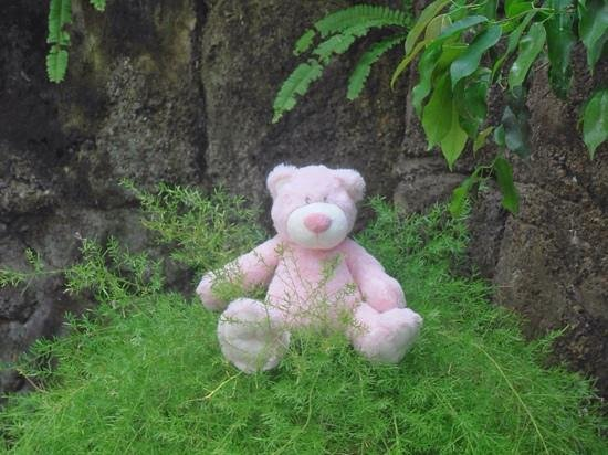 Yulia Beach Inn: my teddy Peggy in the garden at the Yulia