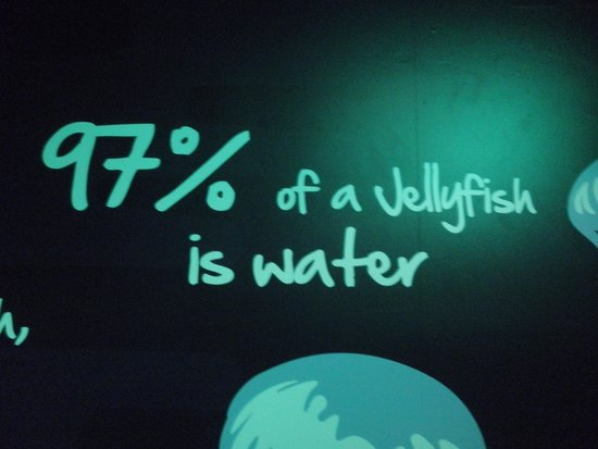 Sea Life London Aquarium: Facts on walls
