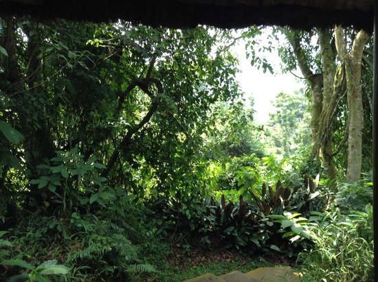 Sanctuary Gorilla Forest Camp: view from my tent