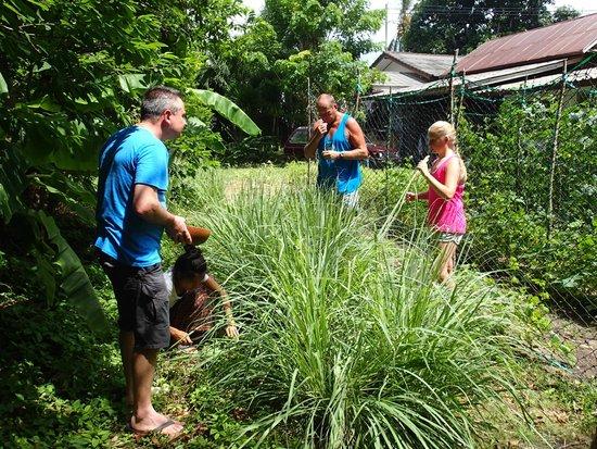 Ying's Thai Cooking Home: Yings garden