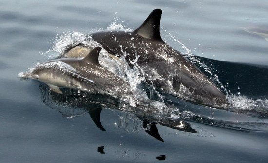 Anglers Lodge: Dolphins
