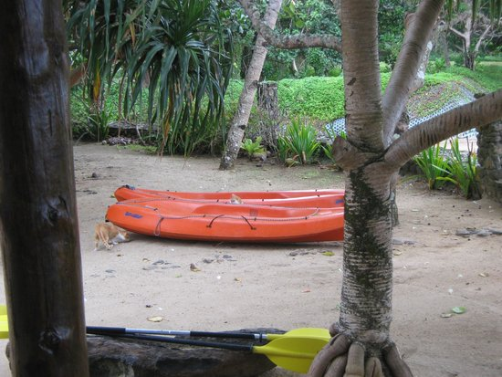 de Vos The Private Residence: The kayaks and cats