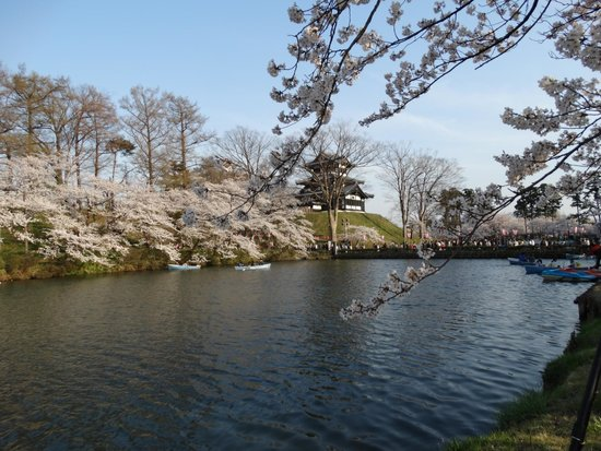 Takada Park: お堀端の桜(ハスも咲くそうです)