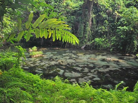 Eden on the River: clear water