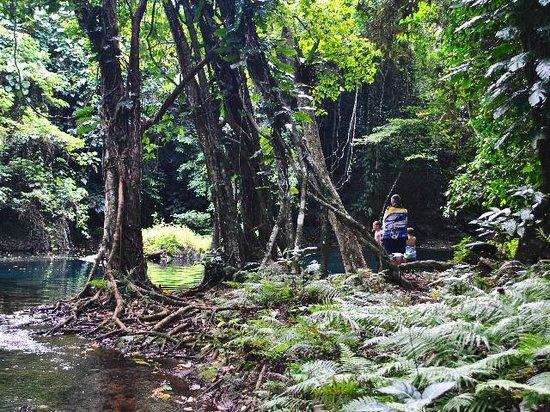 Eden on the River: river walk