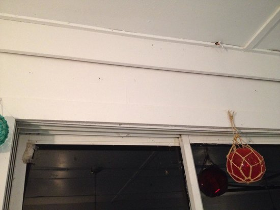 Duryea's Lobster Deck: Bugs lining windows inside order-area. Dirty dirty dirty.