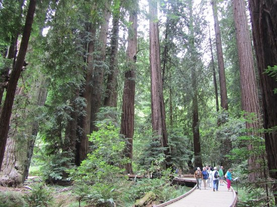 Dylan's Tours: Muir Woods