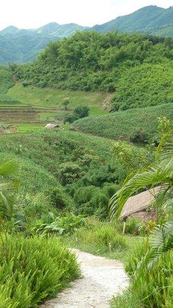 Bamboo Nest de Chiang Rai : The cabins