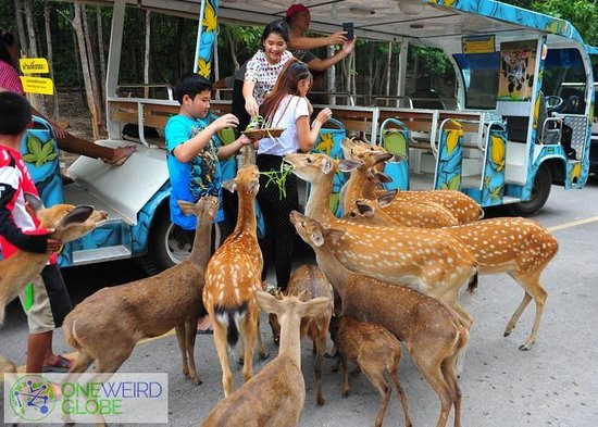Khao Suan Kwang, تايلاند: Feed the deers if you want. Taken from my blog - oneweirdglobe.com