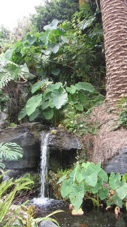 Hotel Puerto de la Cruz: jardín