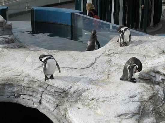 Ozeaneum : вольер с пингвинами
