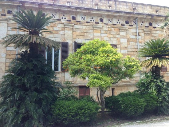 Villa of San Martino: Апельсиновое дерево
