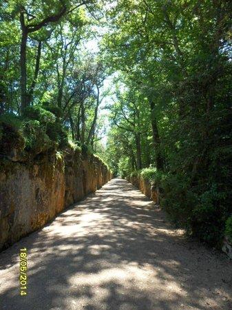 Les Jardins de Marqueyssac : une des allées