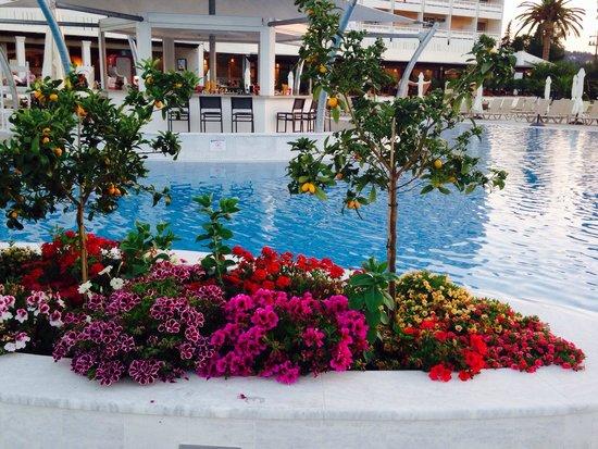 TUI FAMILY LIFE Kerkyra Golf : Pretty flowers around the new pool