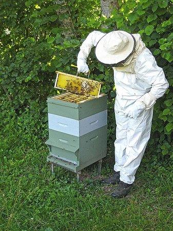 L'Ourserie: Visite de notre ruche