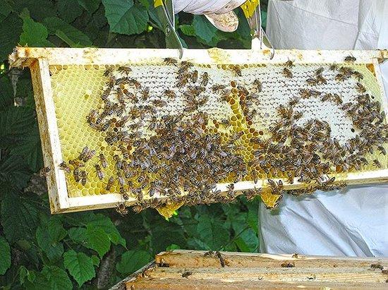L'Ourserie: Bientôt la récolte de notre miel