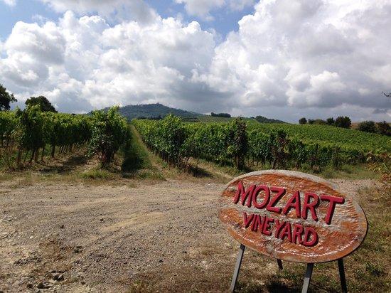 My Tuscan Wine And Tours: Mozart Wineyard