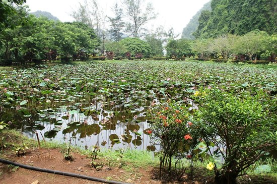 Kek Lok Tong Cave Temple And Zen Gardens: There Are Two Large Ponds In The