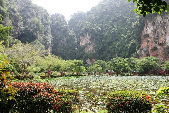 Ipoh, Malaysia: THe huge lily ponds have a backdrop of the limestone hills