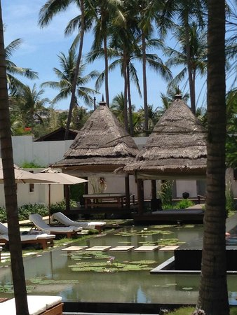 SALA Samui Resort And Spa : Lily pond & pool