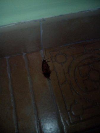 Aparthotel Paul do Mar: cucaracha habitación