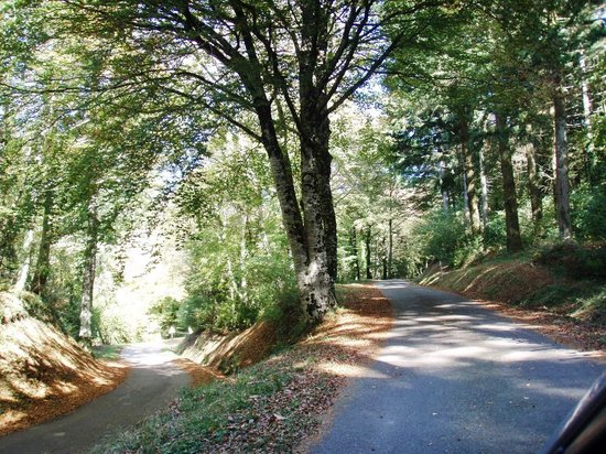Chez Providence Chambres et Table d'Hotes : La Loubatiere one of France's most beautiful woods