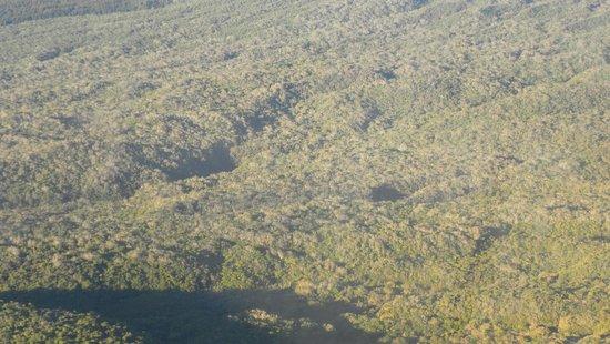 Helilagon: La forêt originelle