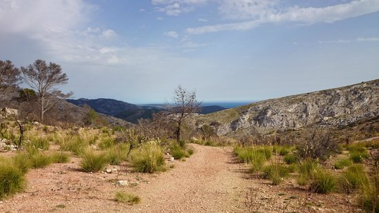 Wildlife Mallorca: 3