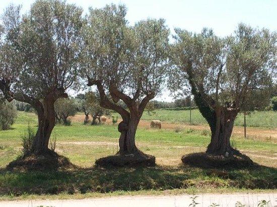 Azienda Agrituristica Le Cascine: L'olio, uno dei credo del titolare: il panorama dalla nostra finestra