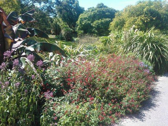 Ventnor Botanic Garden: Gardens