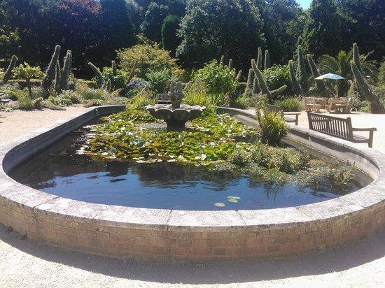 Ventnor Botanic Garden: Pond