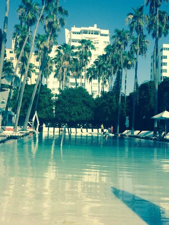 Delano South Beach Hotel : The pool and its beautiful surroundings