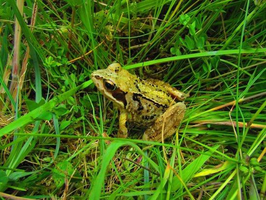Clara Bog Visitor Centre: Frog