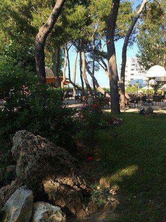 Grand Hotel Berti: Pinetina molto rinfrescante con bar sul bordo piscina