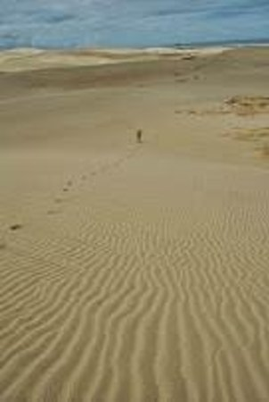 Te Paki Sand Dunes: Long walk....