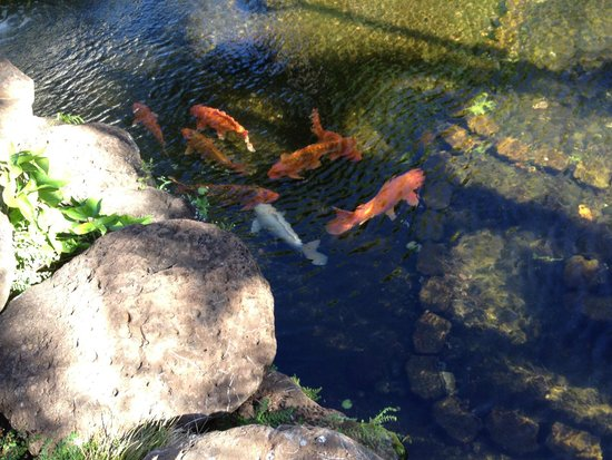 Aston Kaanapali Shores: Koi ponds