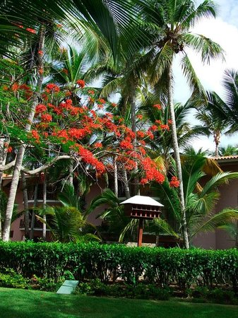 Natura Park Beach - EcoResort & Spa : hotel garden view