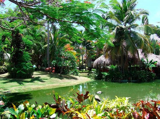 Natura Park Beach - EcoResort & Spa : garden view