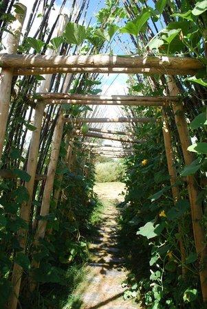 tunnel v g tal les jardins de colette corr ze picture of les jardins de colette varetz. Black Bedroom Furniture Sets. Home Design Ideas