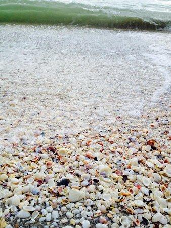 Island Inn: Shells