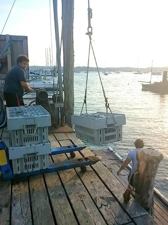 Boothbay Lobster Wharf: Mr S pulling in lobster catch of the day