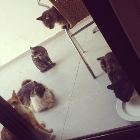 The King Jason Paphos: Some of the cats
