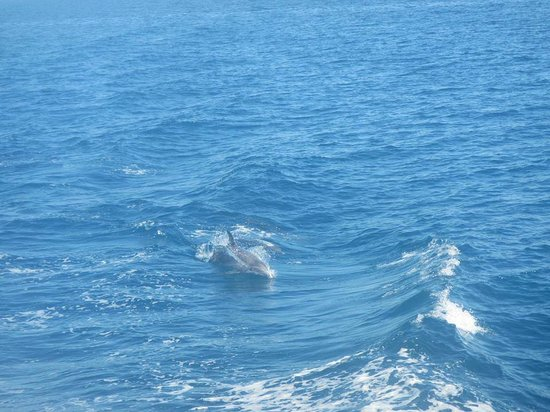 Sunshine Corfu Hotel & Spa: Dauphins durant l'excursion