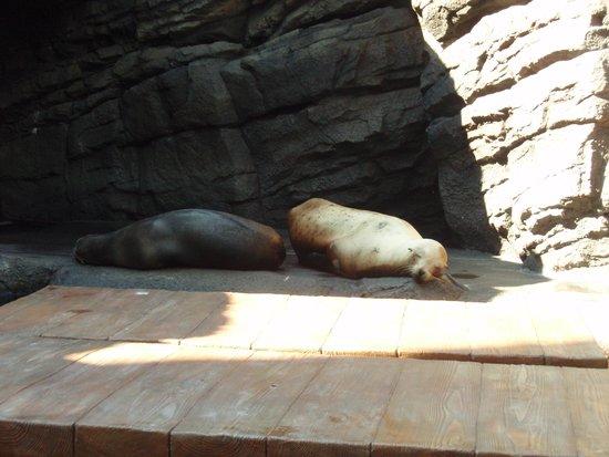 Kamo Aquarium : アシカは寝てました(^^♪