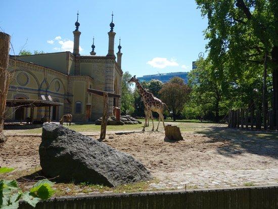 Zoologischer Garten (Berlin Zoo) : wybieg dla żyraf